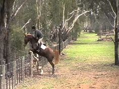 Hunting at Riverview Fox Hunting, Horses, Dogs, Animals, Animales, Animaux, Pet Dogs, Doggies, Animal
