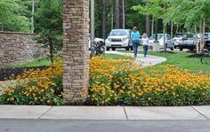 Blackeyed Susans at Quisenberry Library on Northside Drive, Clinton MS