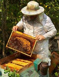 Photo about The beekeeper has control over a framework with honey. Image of apiary, beekeeping, apis - 28862872 Beehive Image, Honey Store, Million Flowers, Beekeeping For Beginners, Beekeeping Equipment, Kenzo, Bee Skep, Bee Do, Bee Farm