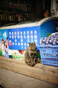 cat on my travels : in Hanzhou