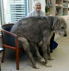 Big Big...Huge dogs