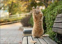 立ち猫12