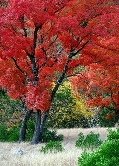 ✯ Lost Maples State Park, Texas