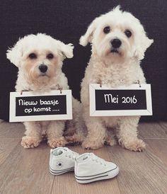 Zwangerschap aankondiging: Na een tijd van wachten, hopen en dromen gaat in Mei 2016 onze grootste wens uitkomen!