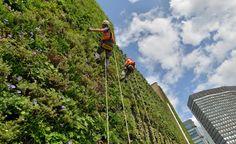 jardim vertical -  7 tendências de arquitetura e construção sustentáveis