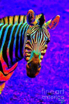 Rainbow Zebra - Nick Gustafson