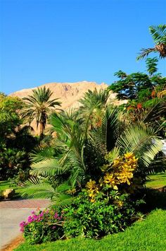 Ein Gedi Botanical Garden. Now that is something to think about - what used to a desert is a botanical garden. Isn't that the Lord fulfilling His promise?
