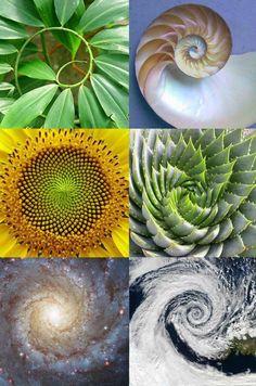 Entender los patrones armónicos que se repiten constantemente en la naturaleza es el primer paso para recuperar nuestra sensibilidad