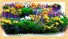 Kezdőlap - gazigazito.hu Plants, Pictures, Plant, Planets