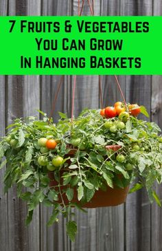 7 Fruits & Vegetables You Can Grow In Hanging Baskets - - Planting fruits and veggies in hanging pots is a great way to maximize space, add more visual interest to your garden and save money on your grocery bill. Hanging Vegetable Basket, Hanging Basket Garden, Plants For Hanging Baskets, Hanging Herbs, Hanging Flowers, Hanging Pots, Hanging Gardens, Hanging Plants Outdoor, Vegetable Garden