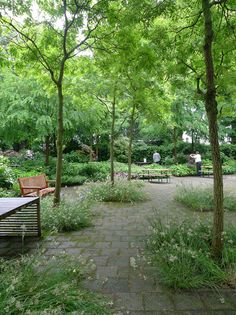 Robinia trees underplanted with Luzula nivea (shade plant) and campanulas.Garden at Amnesty International, Amsterdam - Landscape Plaza, What Is Landscape, Landscape Elements, Landscape Architecture Design, Garden Landscape Design, Lake Garden, Gravel Garden, Forest Garden, Garden Stairs