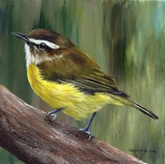 """Daily Paintworks - """"Brown Capped Vireo"""" - Original Fine Art for Sale - © Janet Graham"""