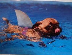 襲われてもおkな感じのサメ画像