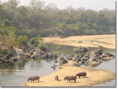 Kamerun Elephant, Travel, Animals, Animales, Trips, Animaux, Viajes, Traveling, Animal