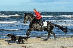 Warum wir Pferde lieben - eine Galerie