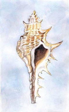 Seashell Watercolor Fine Art Print by JuniperHouseStudio on Etsy, $18.00