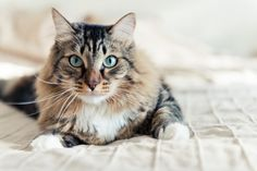 2 Homemade Recipes for Cats Suffering from Kidney Disorders | Pets4Homes