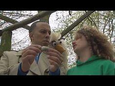 Huisje Boompje Beestje - De Uil - YouTube
