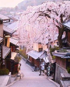 Cherry Blossom Japan, Cherry Blossoms, Japan Street, Fantasy Landscape, Tokyo Japan, Japanese Culture, Japan Travel, Pretty Pictures, Land Scape