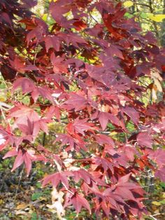 Pocono Fall Foliage 2012