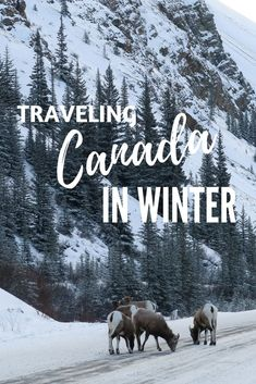 A Dream Winter Trip to Alberta, Canada. Thanks to Canada by Design, I took my Mum on a dream trip to the beautiful Rocky Mountains in Alberta, Canada in winter - click through to find out our Canada itinerary and the logistics so you can plan your own dream trip to Canada in winter.   Camels and Chocolate #canada #wintertravel #alberta #canadabydesign #sponsored