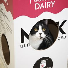 This is Minnie, a resident of NEADY Cats, a no-kill, cats-only shelter in Sterling Massachusetts. She loves the Mega Milk Carton by Cat in the Box