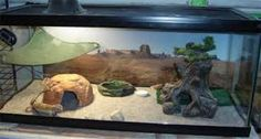 「leopard gecko habitat」の画像検索結果
