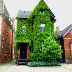 Unique forest home within Toronto.