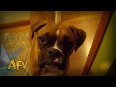 A Symphony Of Fantastic Dogs | AFV Music Compilation | AFV - YouTube