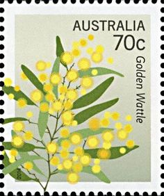wattle drawing - Google Search