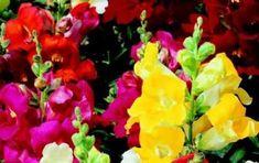 Fiori estivi: le foto di quelli  più belli e decorativi [FOTO] - I fiori estivi più belli sono sicuramente le rose, i gerani, le ortensie, i girasoli, i gigli e le gerbere