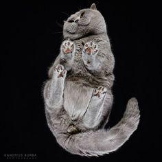 un chat photographié par en-dessous (1)