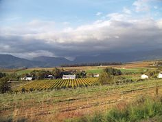 Wellington, South Africa  earthbutterstudio