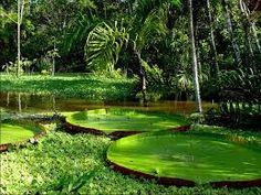 Resultado de imagem para amanhecer na amazonia