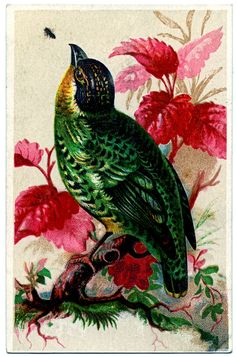 French Trade Cards Vintage   not sure what kind of bird this is, but I think his bright green ...