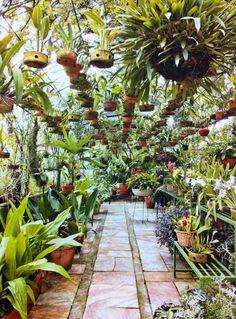 Como uma apaixonada pelas flores cuida de seu orquidário, que fica dentro de um jardim de 500 m². Orchids Garden, Orchid Plants, Garden Plants, House Plants, Garden Shop, Dream Garden, Indoor Garden, Indoor Plants, Garden Center Displays