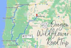 Take This Road Trip To The 7 Most Eye-Popping Wildflower Fields In Oregon Sunriver Oregon, Painted Hills, Bureau Of Land Management, Iron Mountain, Oregon Washington, Oregon Travel, Vacation Trips, Wild Flowers