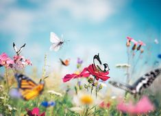 The 6 Hottest Garden Trends of 2021 - PureWow Big Garden, Summer Garden, Garden Tips, Garden Ideas, Romantic Flowers, Amazing Flowers, Prado, Cottage Garden Design, Butterflies Flying