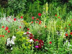 wild beautiful gardens - Google Search