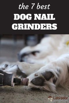 The 7 Best Dog Nail Grinders - Dremel grinding yellow dogs toe nails. Dog Care Tips, Pet Care, Nail Guards, Dog Nails, Service Dogs, New Puppy, Grinding, Dremel
