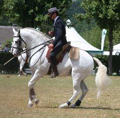 Ride an Andalucian horse