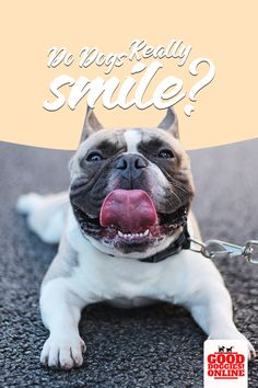 You see your dogs smiling all the time and sometimes with teeth but is it really a smile? Check this out to know more if dogs really do smile or laugh. #gooddoggies #dogs #pets #dogowner #smile #happy #happydog