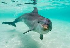 inhabits the aquatic environment , and is very intelligent mammal .