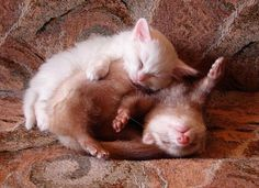 Kittens and grown cats can sleep in weird positions and just about anywhere! LOL!