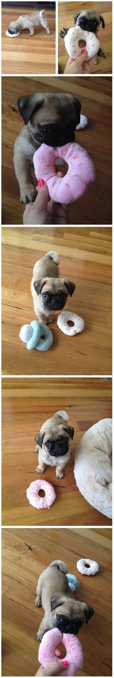 PUG LOVE #pug #puppy Cute Pug Pictures, Pug Photos, Pug Mug, Baby Pugs, Chugs, Pug Puppies, Little Critter, Cute Pugs, Paw Prints