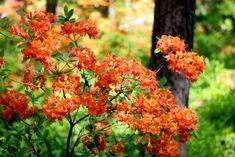 Retkellä Alppiruusupuistossa – Dream of the Day Lifestyle, Day, Plants, Plant, Planets