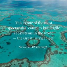 Did you catch David Attenborough's Great Barrier Reef 3-part doco series?  If you missed it or you just want to relive it again and again you can watch it on ABC iview! My favourites were the dwarf minke whales off Far North Qld waters. These illusive whales come to the Ribbon Reefs every year in June & July but no one quite knows why! What were your favourite bits?? #greatbarrierreef #wearethesirens #sirensforthesea #wildsearch #minkewhales #attenboroughsreef #coralbleaching #tropical…