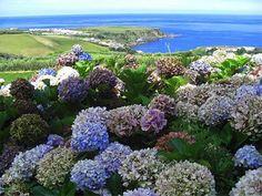 Outra magnífica foto dos Açores