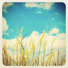 Love/blue skies