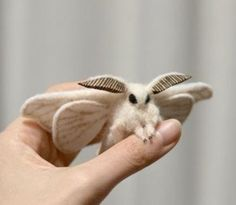 Venezuelan Poodle Moth- This moth is creepy and adorable all in one. Discovered in 2009, it kind of looks like a Pokemon.